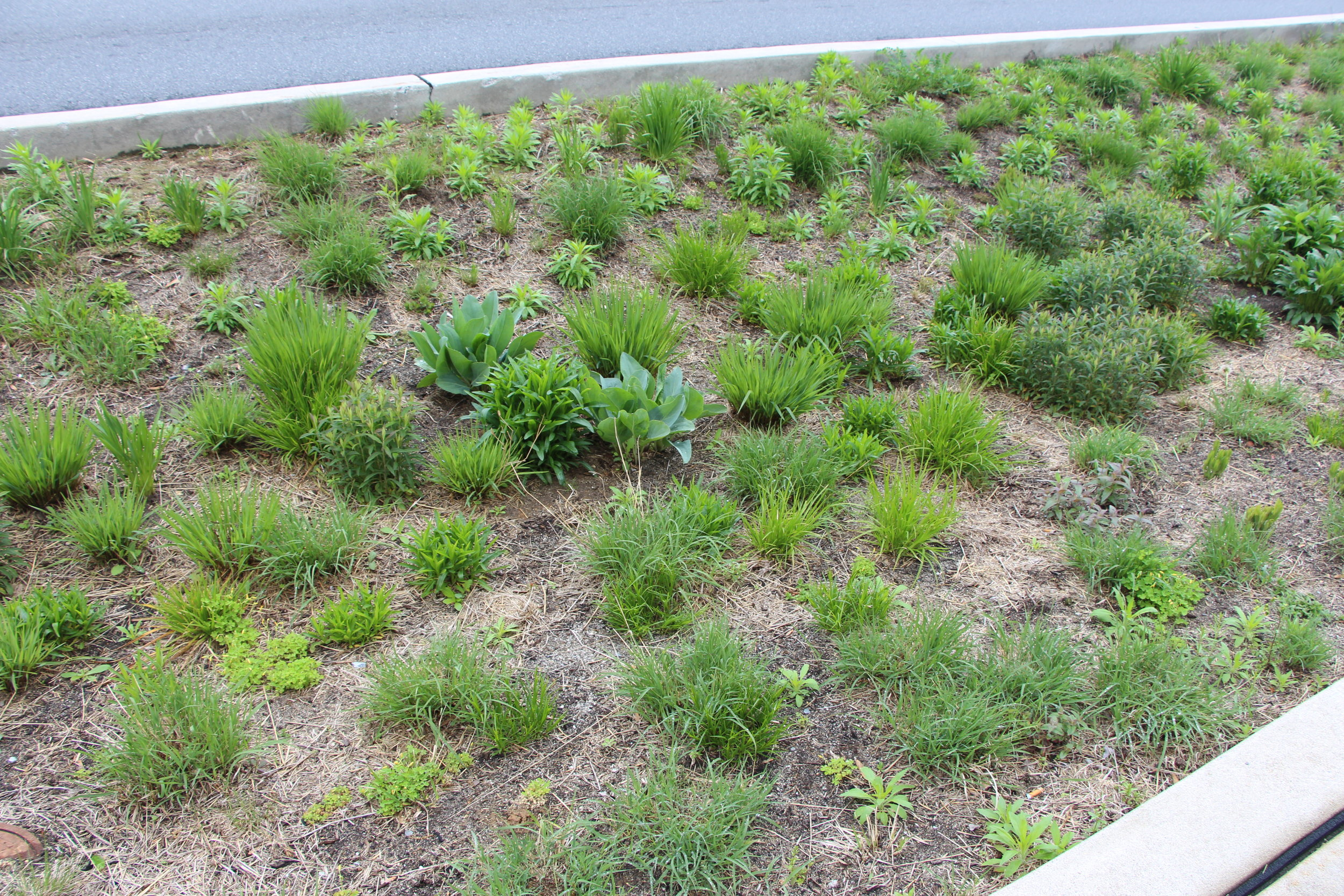 early spring bioretention