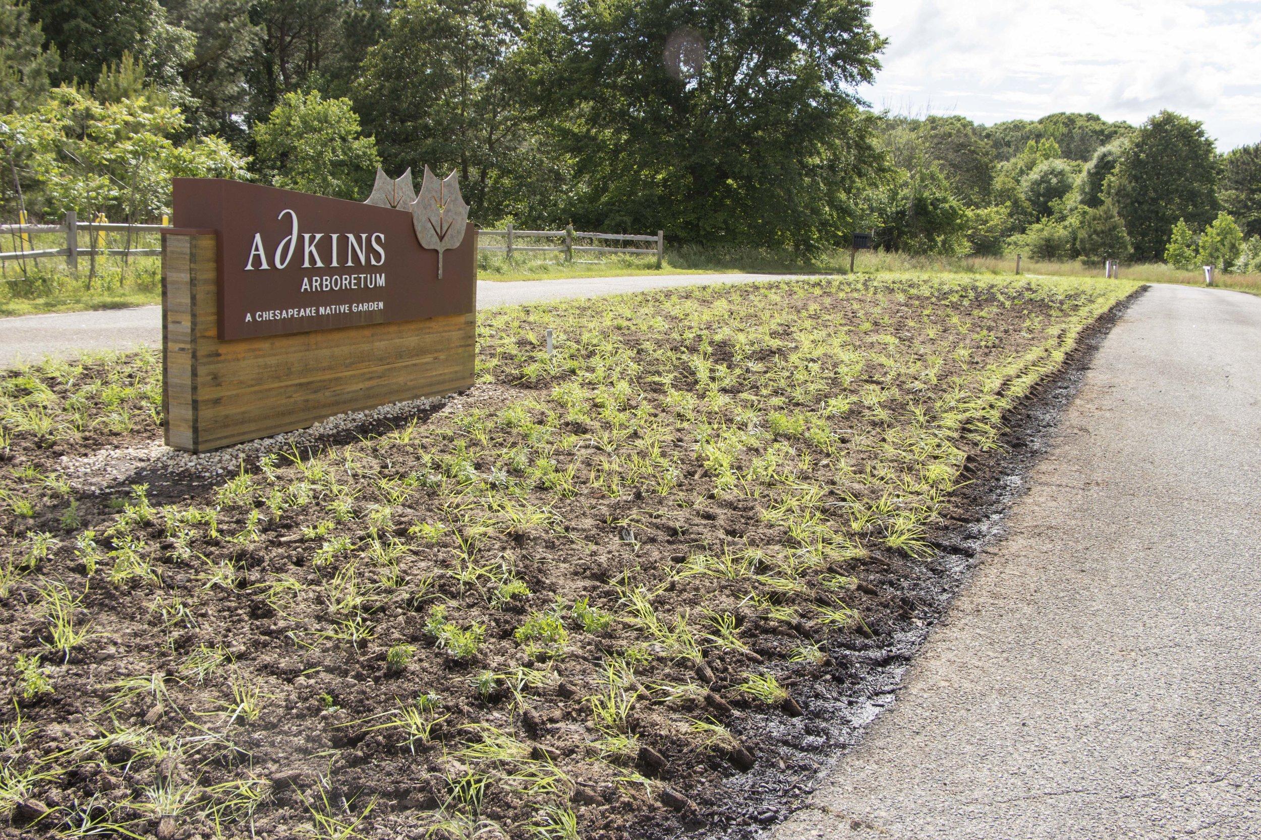 Adkins Arboretum meadow