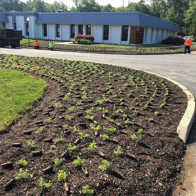 Ripping out ecologically dead turf and Berberis and planting a mix of beautiful, life-supporting perennials at Evolve Corporate Center in Wayne, PA. Raising the bar for America's campuses!! Thank you Chris and team for making this happen!
