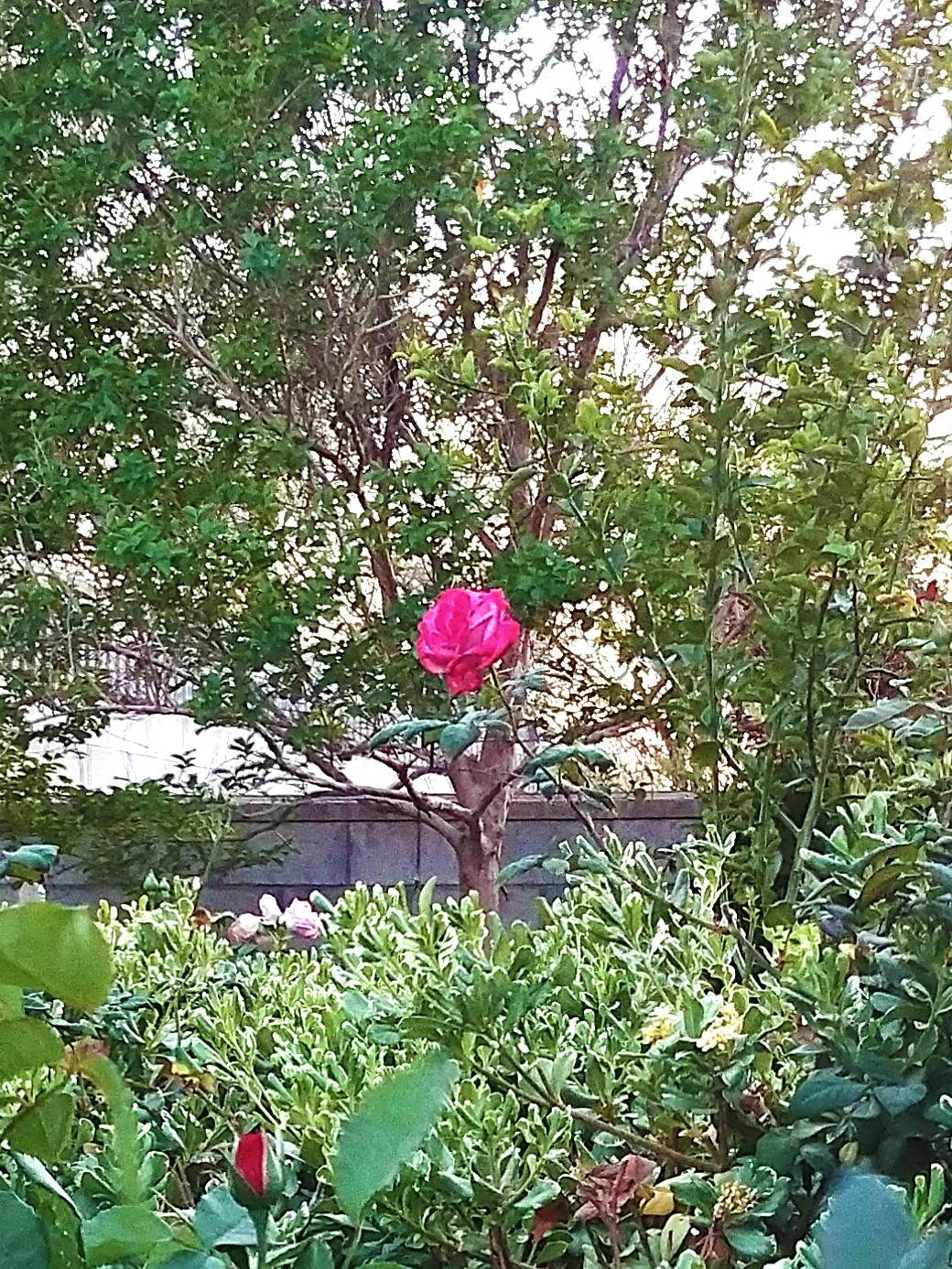 g6 rose colored.jpg