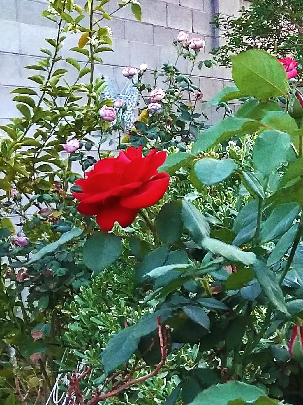 g6 roses left.jpg