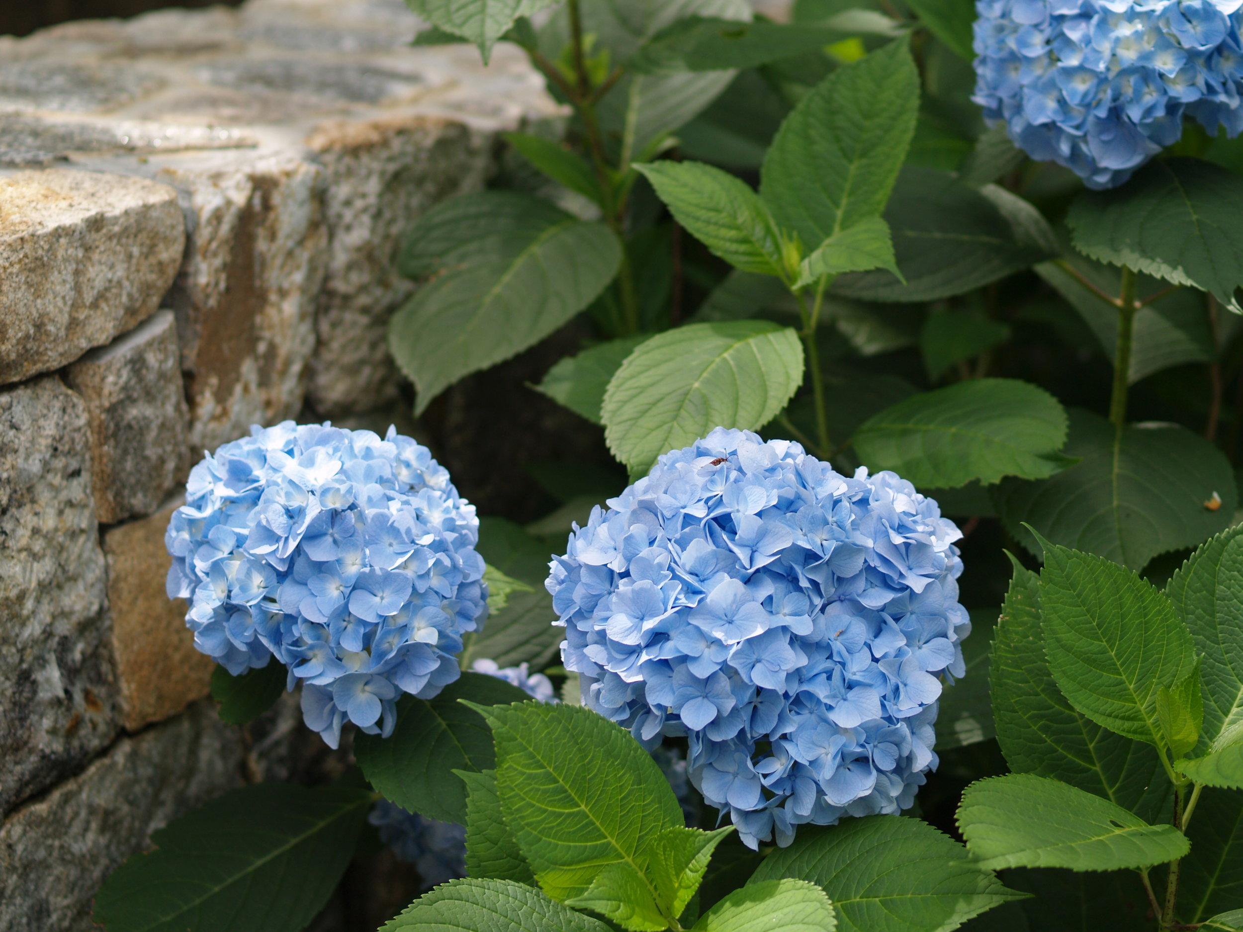 gardennew4.jpg