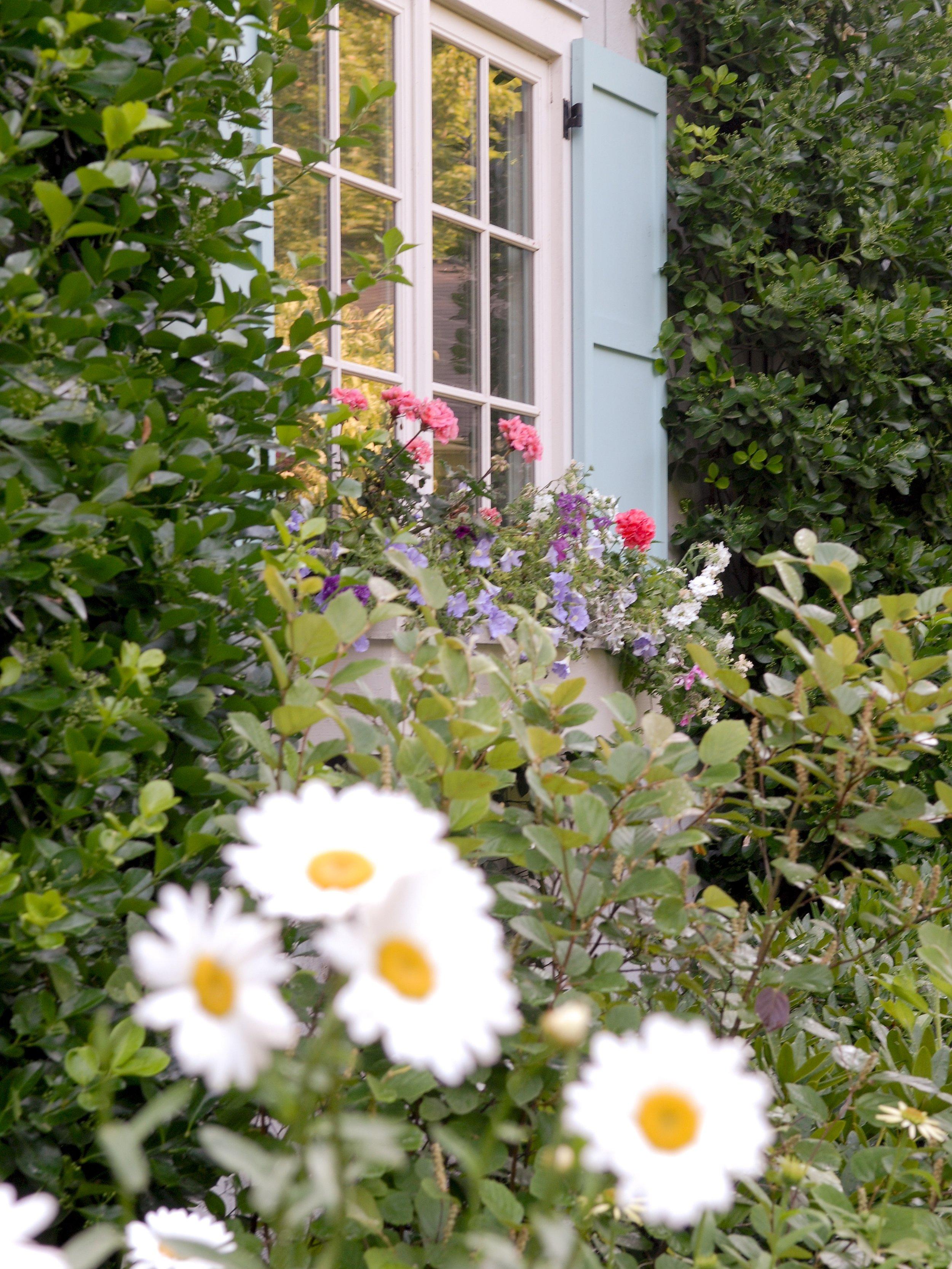 gardennew7.jpg