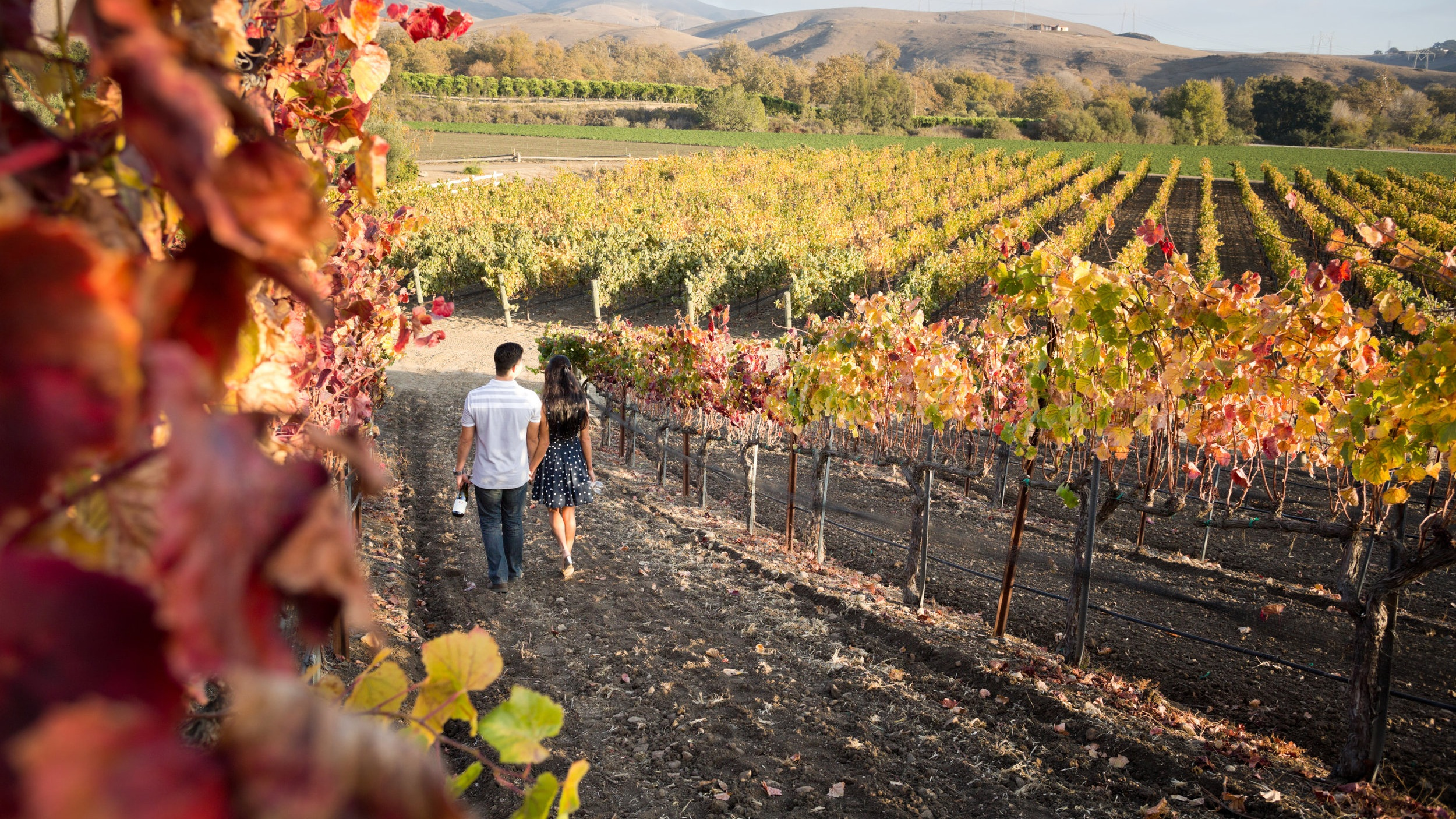 paso robles wineries with the best views