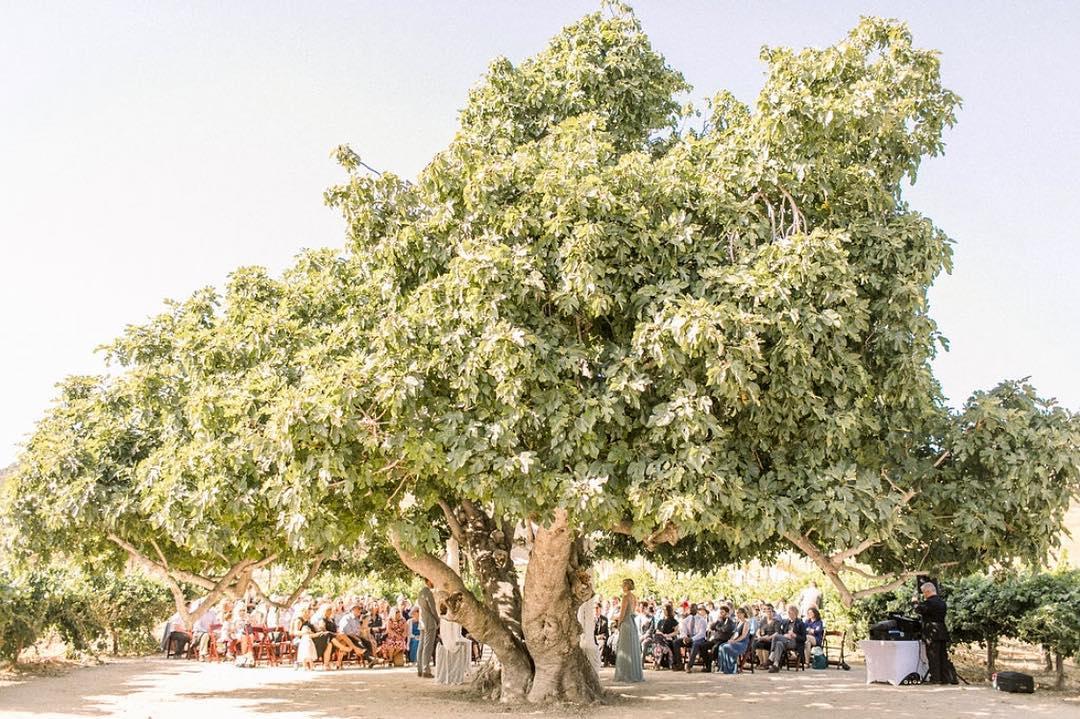 Higuera Ranch - Wedding Venue