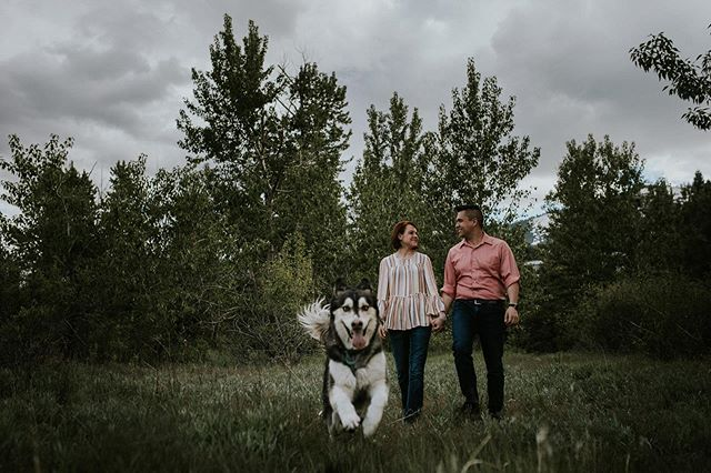 As a fellow husky mom...I can say this photo sums up husky life. Always smiling and have to be the center of attention. • • • • • #renophotographer #engagementphotographer #engaged #doglife #husky #huskylife #photobomber  #engagementsession #northerncaliforniaphotographer #northernnevadaphotographer #nevadaphotographer #shesaidyes #huskiesofinstagram #egagement #futuremrs
