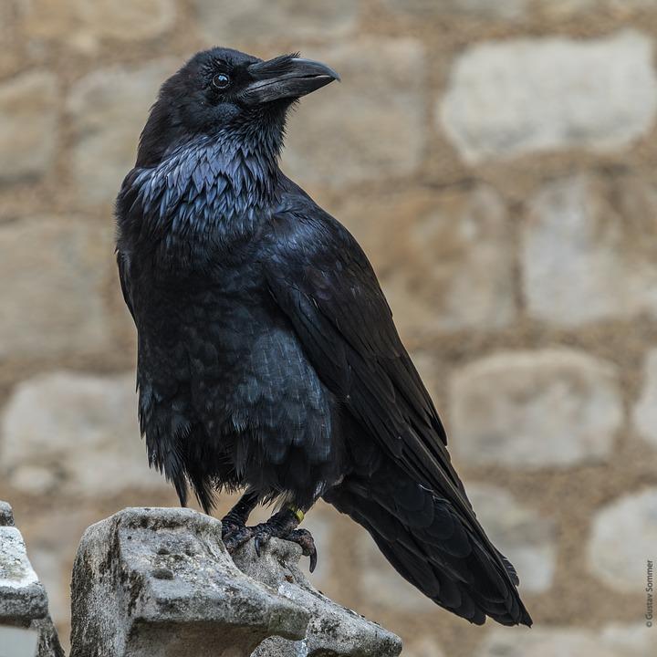 raven-3663930_960_720.jpg
