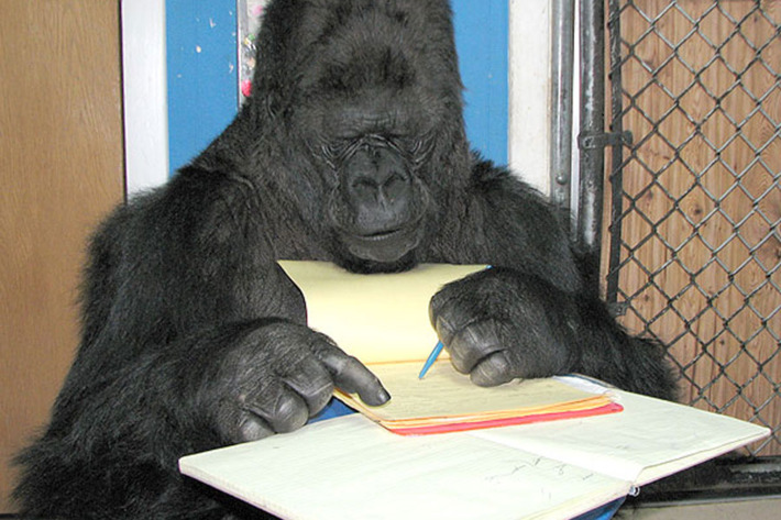 21-koko-the-gorilla-read-2.w710.h473.jpg