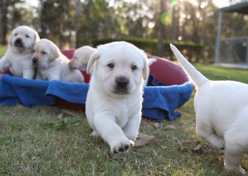 blonde+pup+(1).jpg