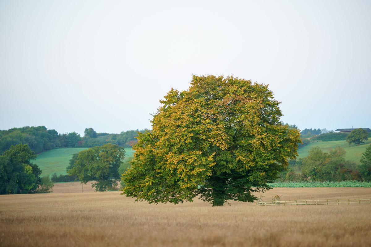 #1 - Beautiful solitary tree