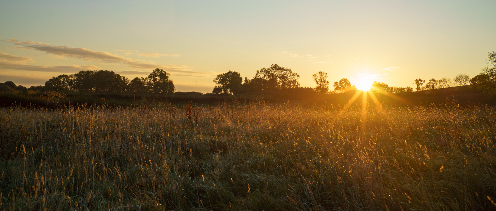 #7 - Long grass backlit by the sun