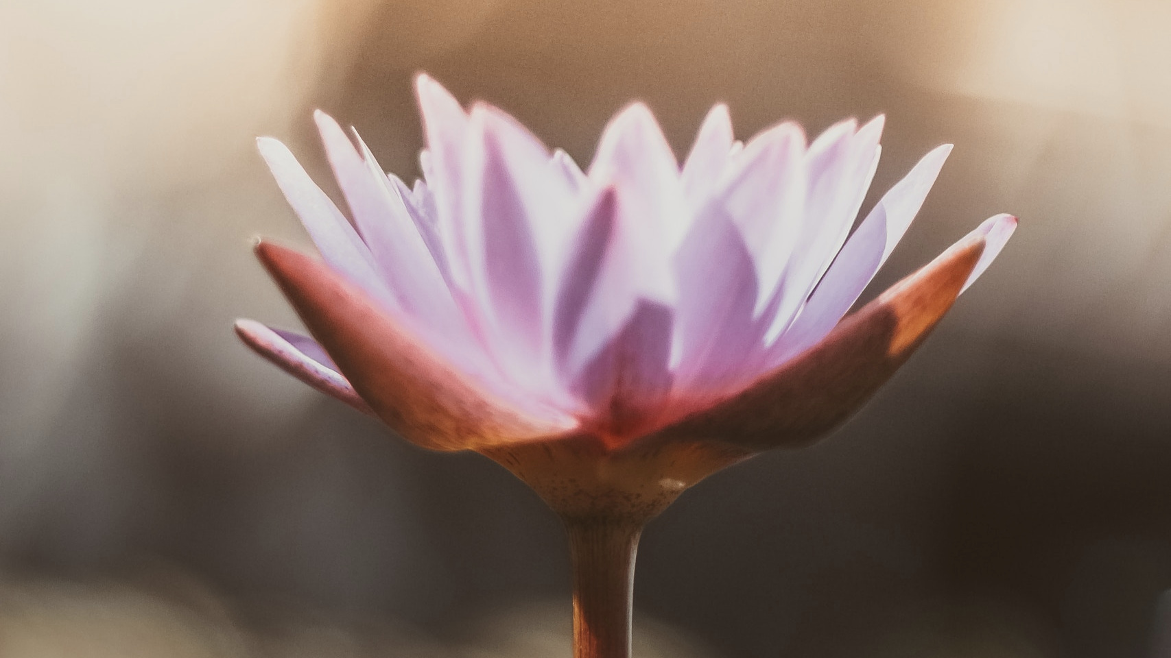 lotus-angela-blank.jpg