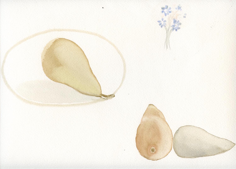 three pears   watercolour  31x36cm