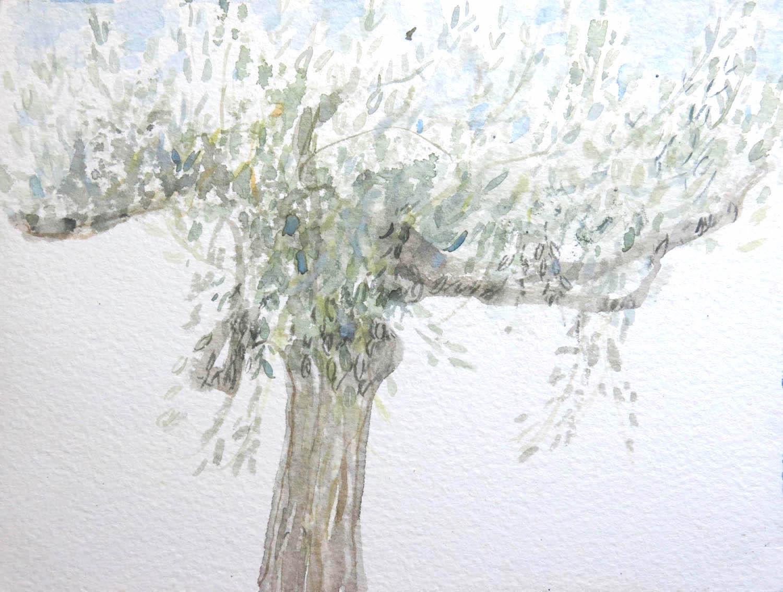 single olive  peloponnese  watercolour  15x18cm