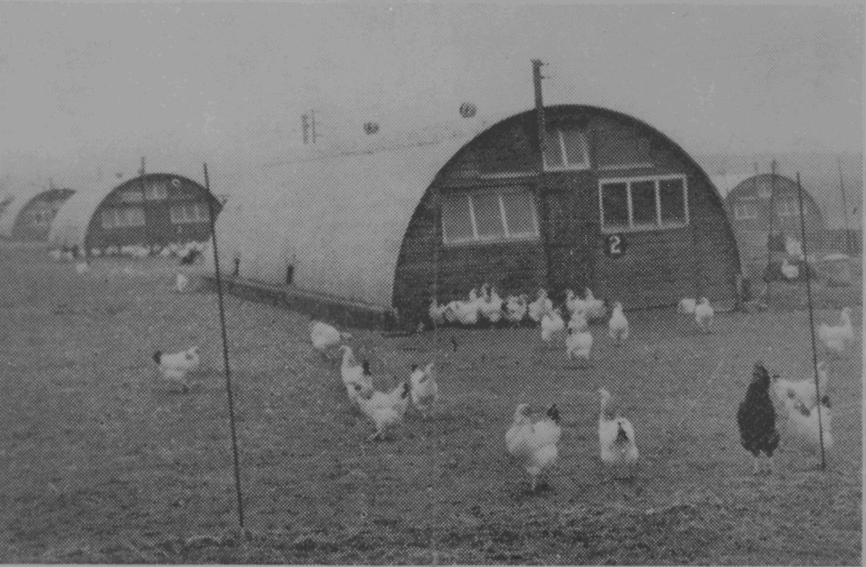 ....  An 85-year history dedicated to poultry  ..  Hanes 85 mlynedd o weithio'n benodol â dofednod  ....
