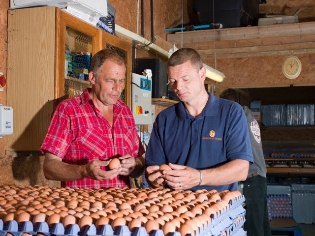 hfandp_free_range_organic_eggs_2.jpg