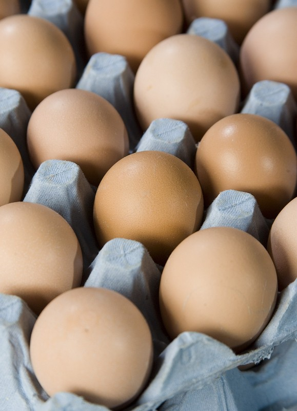 Variables Influencing Egg Size