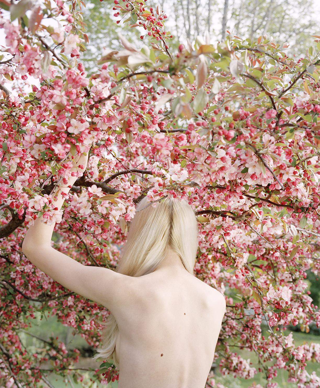 Raising the Cherry Tree