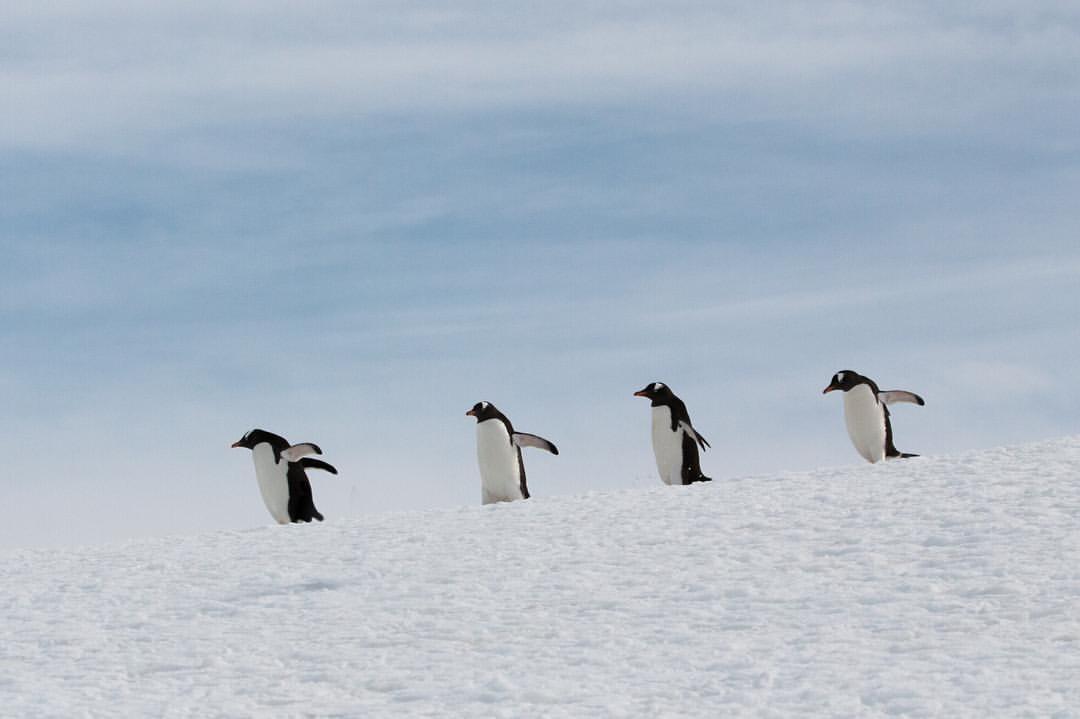 Happy Earth Day 🌍✌️   #antarcticaordie   (at Antarctica)