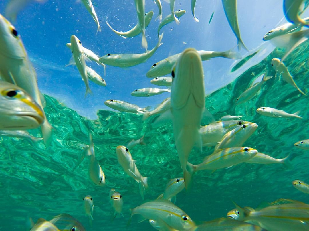 Found some fish (at Arashi Beach, Aruba)