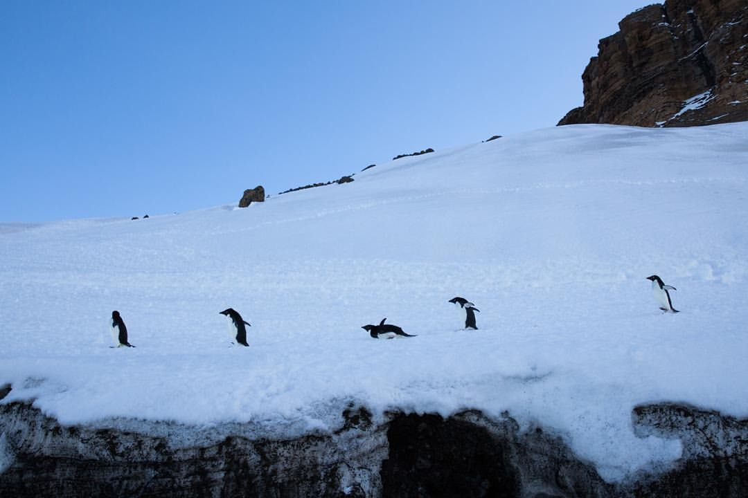 Tiny Beautiful Things    #antarcticaordie #marchofthepenguins    (at Antarctica)