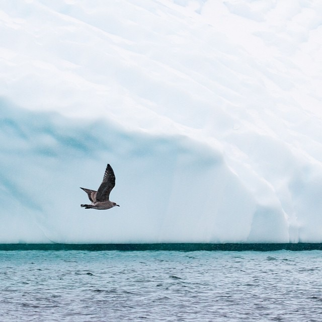 Take flight!! This is my last image before I hit the Drake again for my 2nd Antarctic expedition #antarcticaordie (at Antarctica)