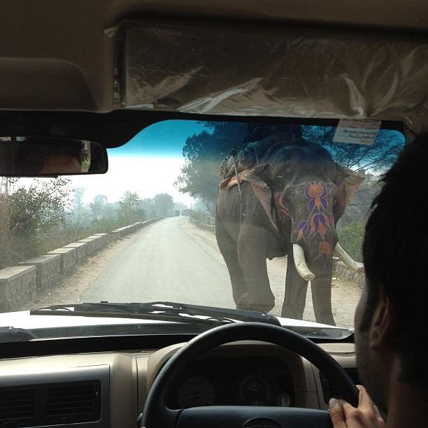 Playing chicken with an elephant (at Delhi, India)