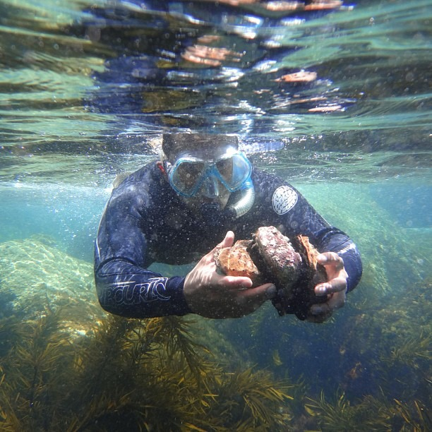 Diving for abalone, the most expensive thing I've ever eaten #wilsonspromontory