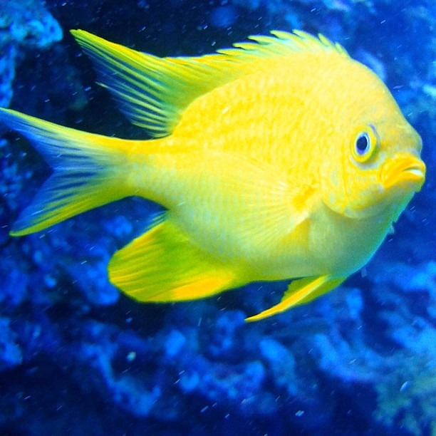 It was all yellow (at Great Barrier Reef)