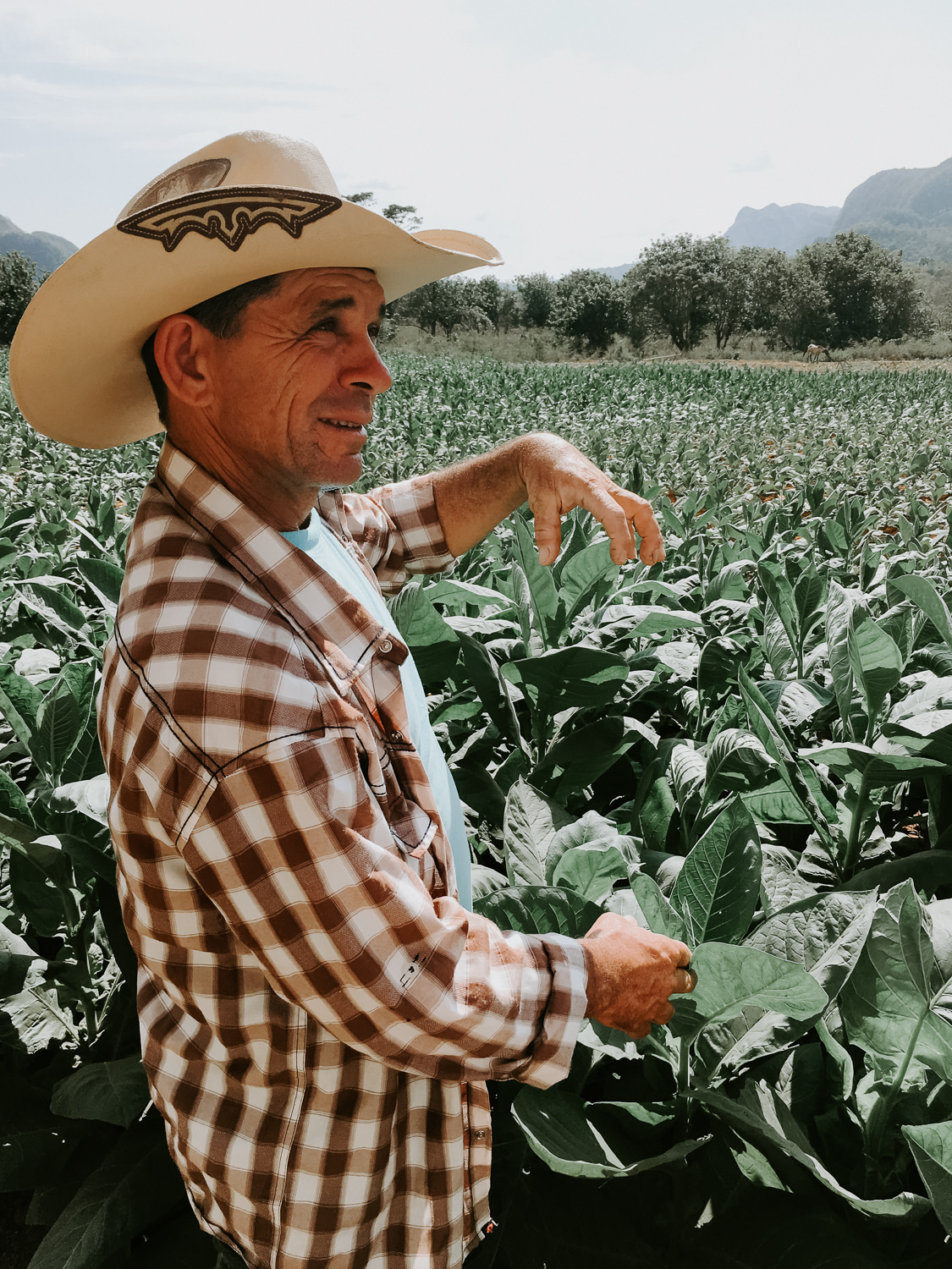 learning about tobacco farming
