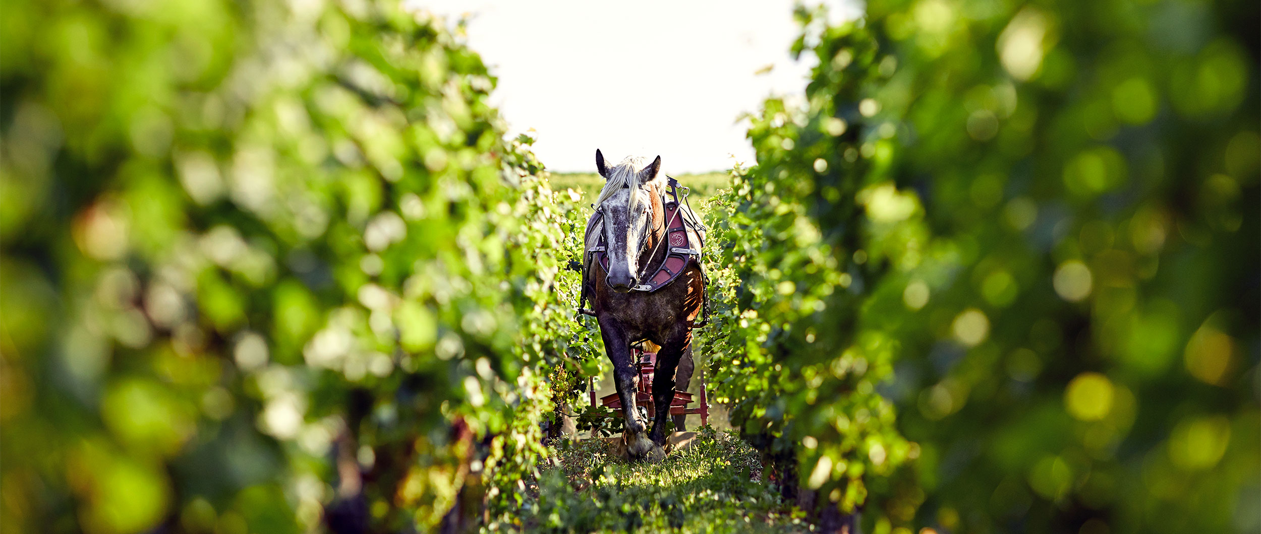 Explore the rich history of Bordeaux winemaking
