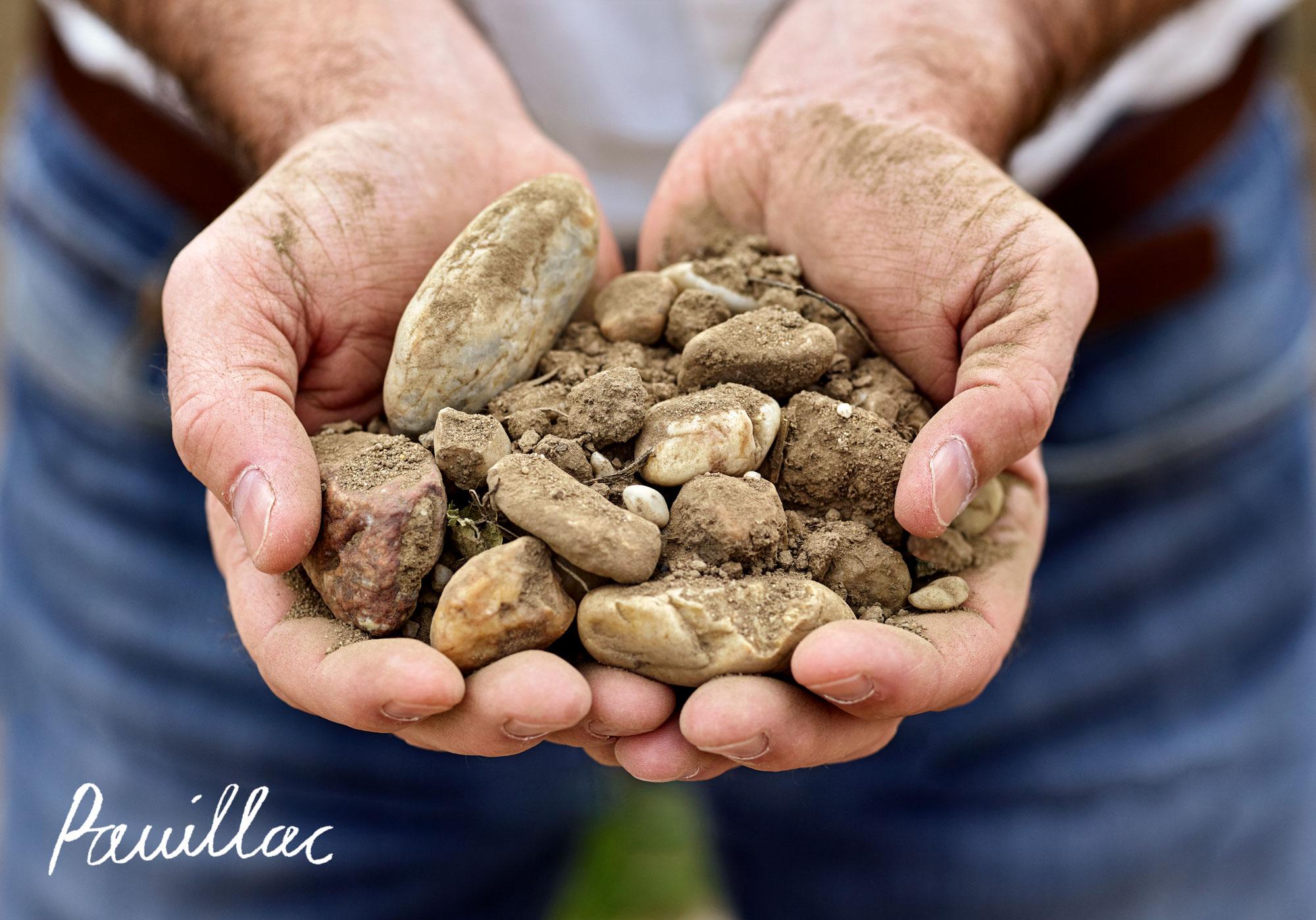 Pauillac terroir from the Bordeaux wine region
