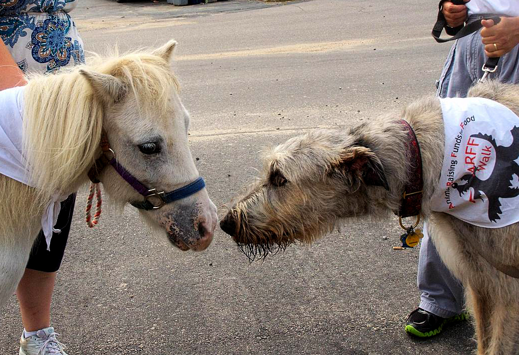 Sometimes unlikely friendships emerge at the annual ARFF Walks