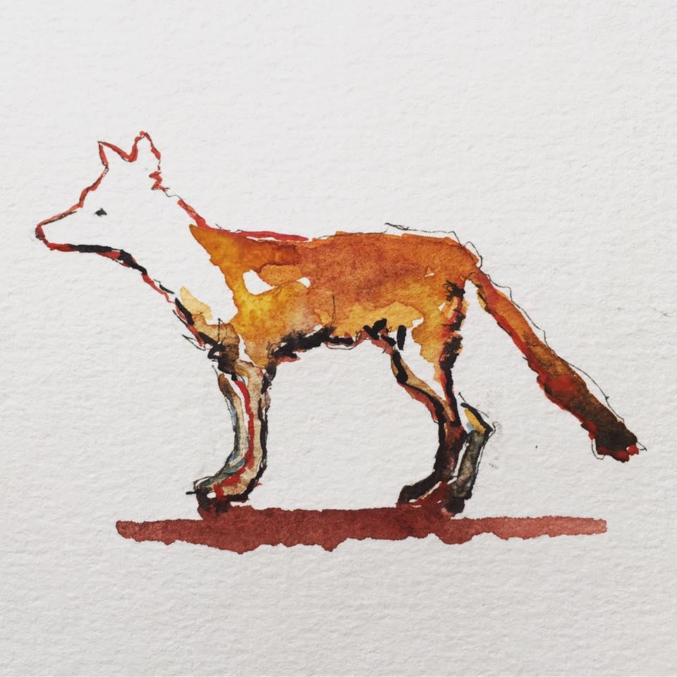 Raggedy little fox still trying to cross the highway near Sackville, NB