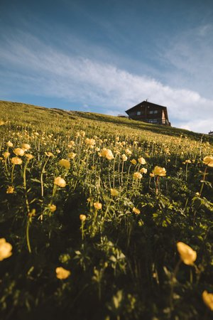 fleurs sauvages dolomites