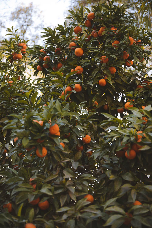 parc maroc oranger