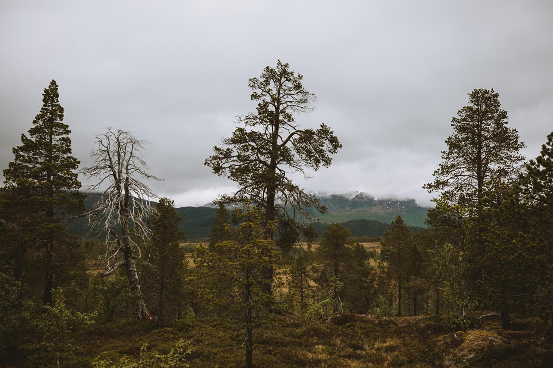 parc national anderdalen