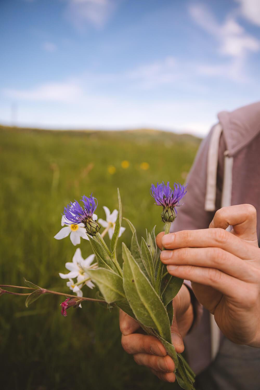 bouquet fleurs comestibles