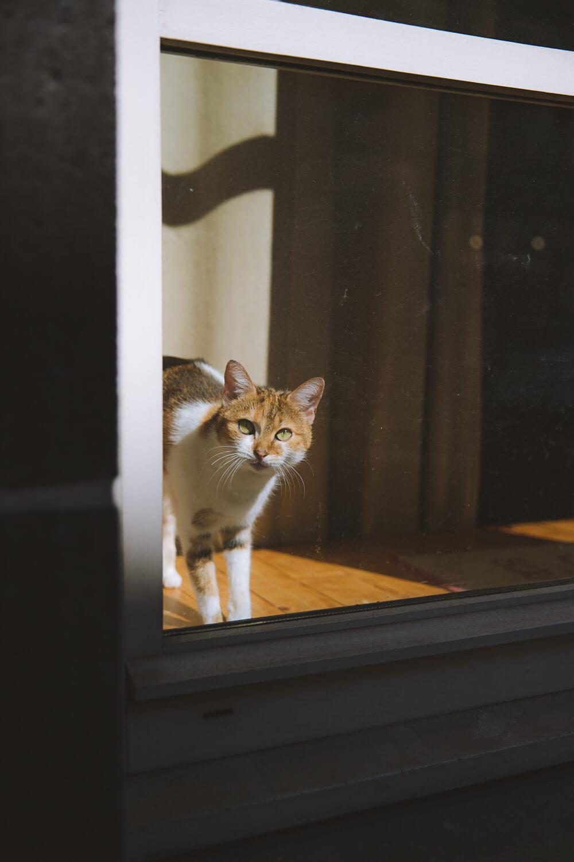 chat a la fenetre riom