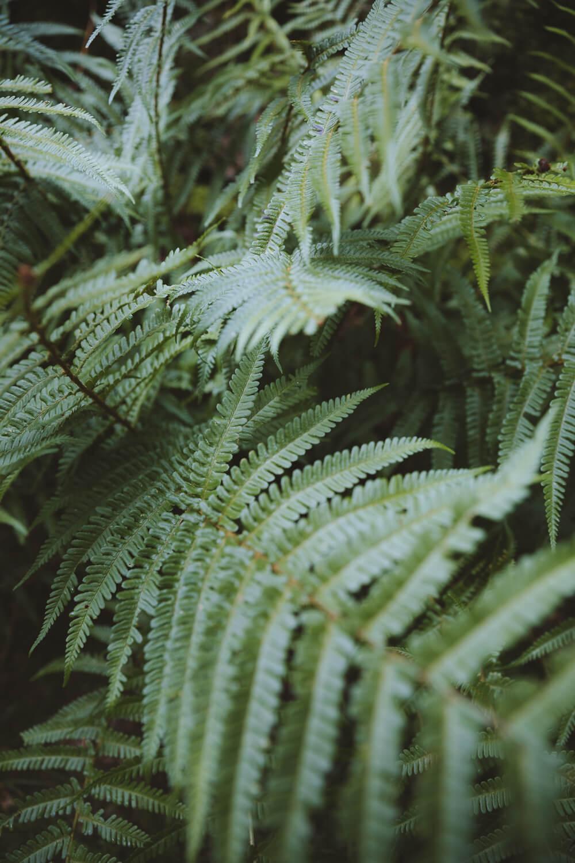 fougeres jardin william wordsworth