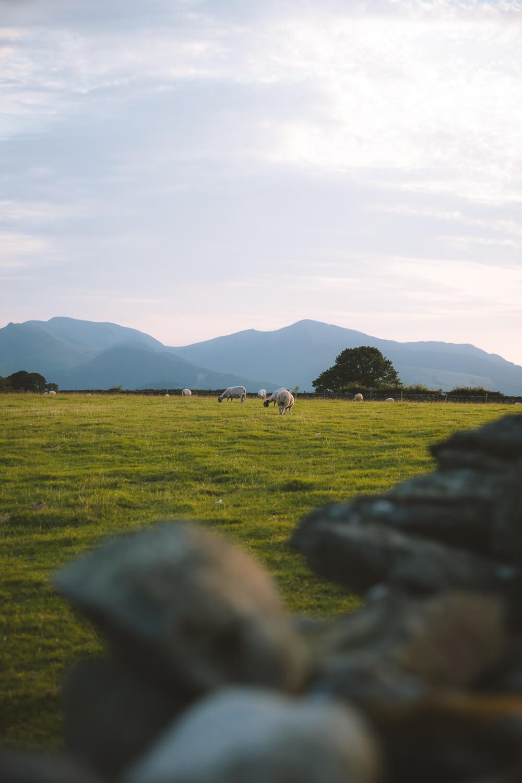 moutons cromlech castle riggs