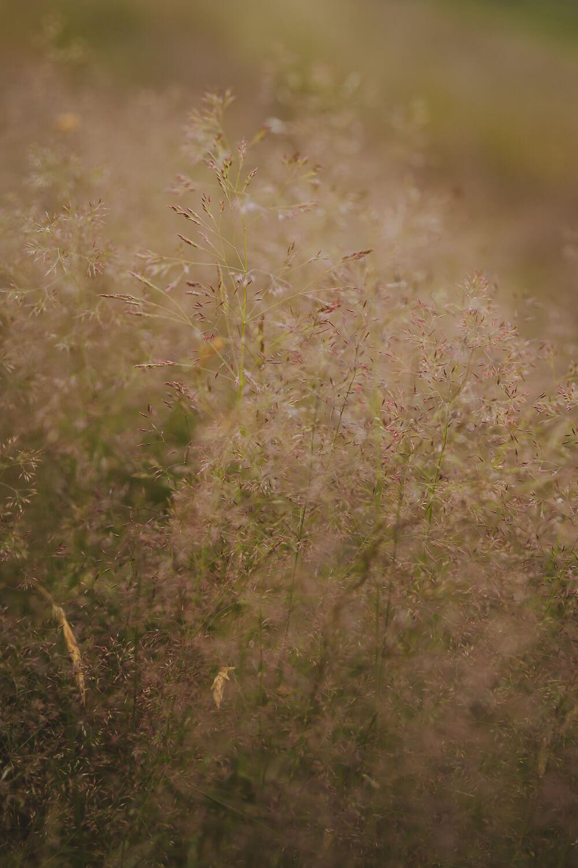 vegetation angleterre
