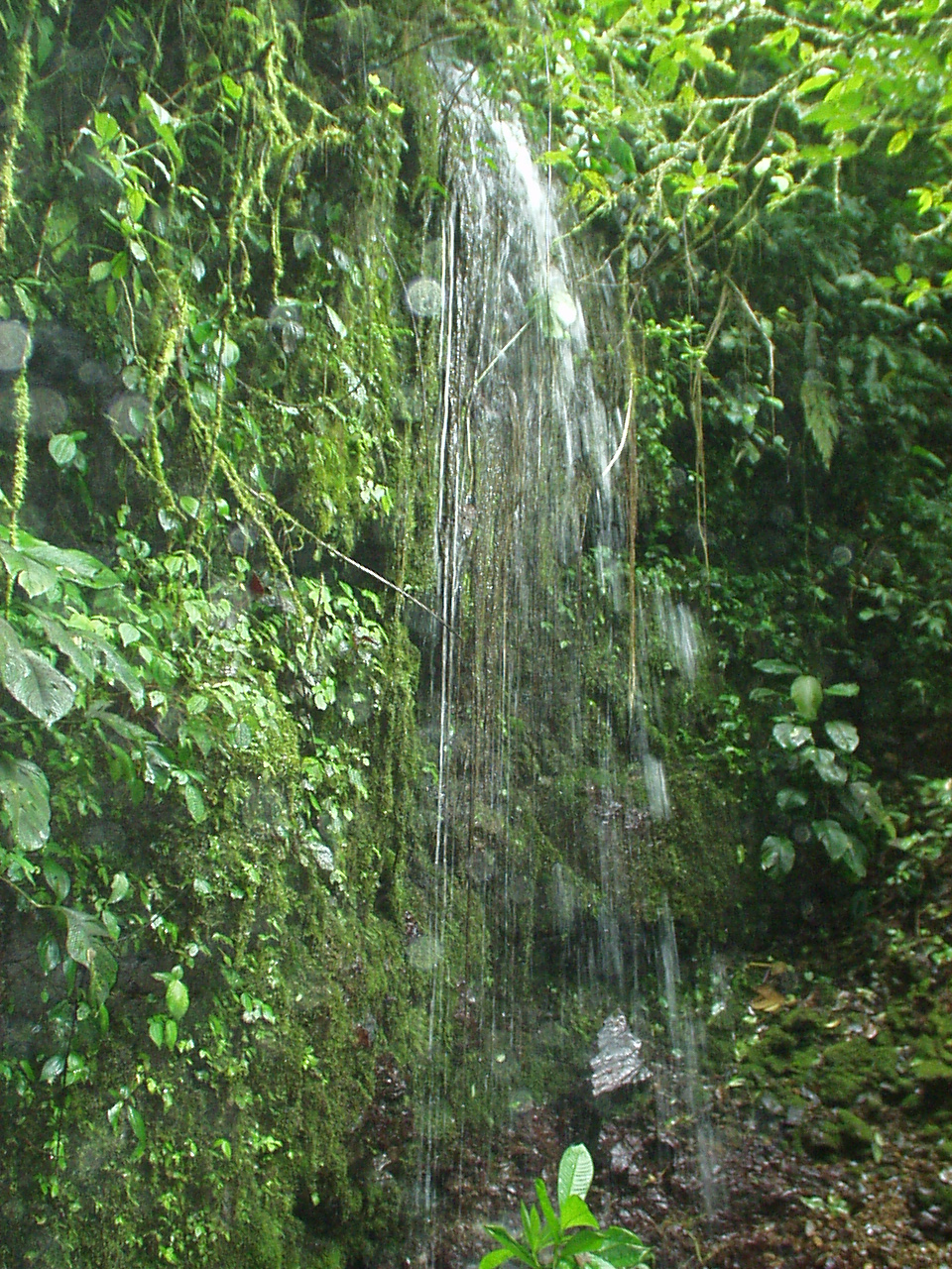 Hike to the   Waterfall on The Reserve; 2 hour roundtrip. $5 or ¢3,000 colones.