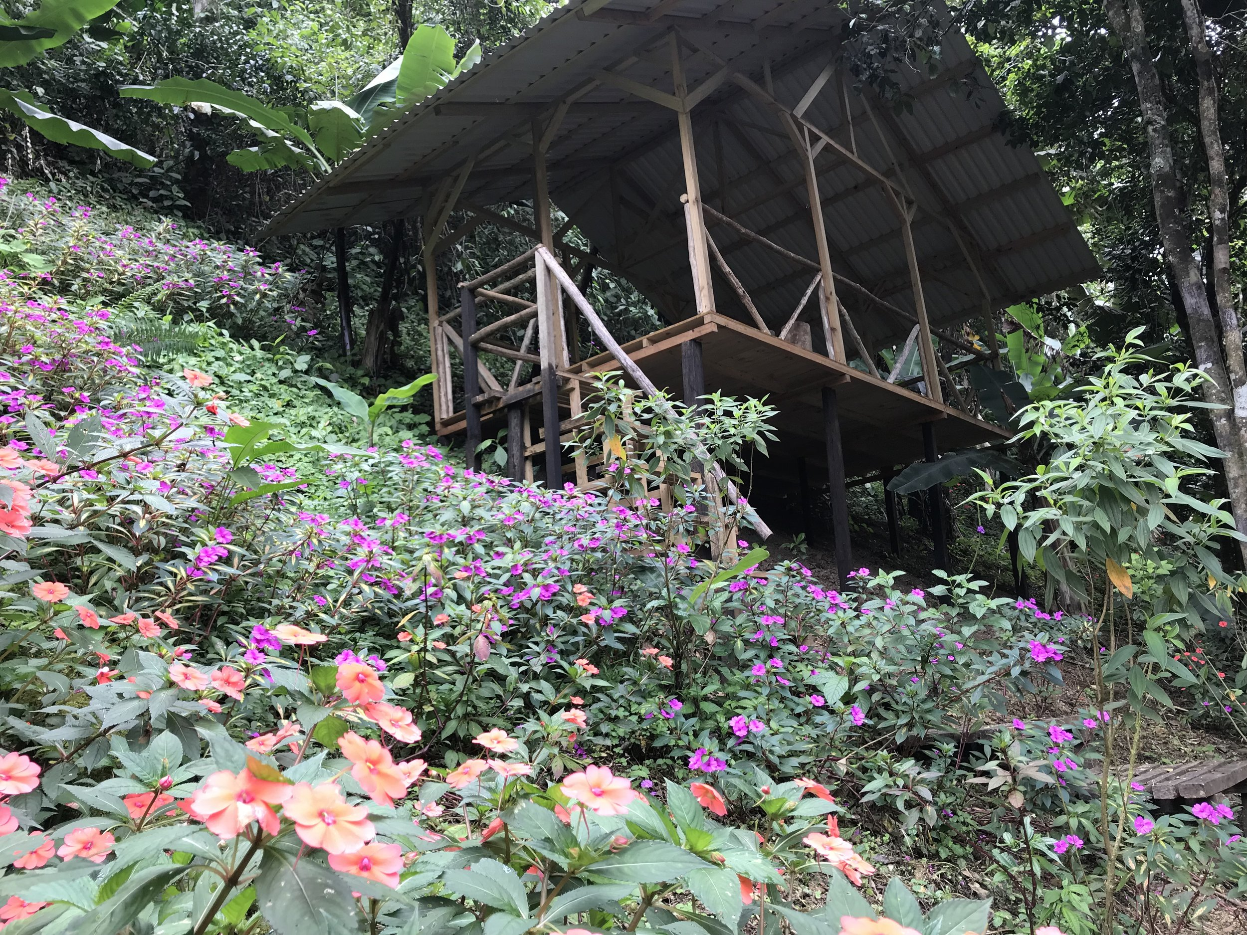 PLATFORM PAVILION #3; Stay Dry in the rain. Rate for 2 campers, sharing 1 tent; Rental for 1 Tent, 2 S  leeping Bags, 2 Foam Pads, 3 meals: $910/week or ¢514,200 colones/semana.