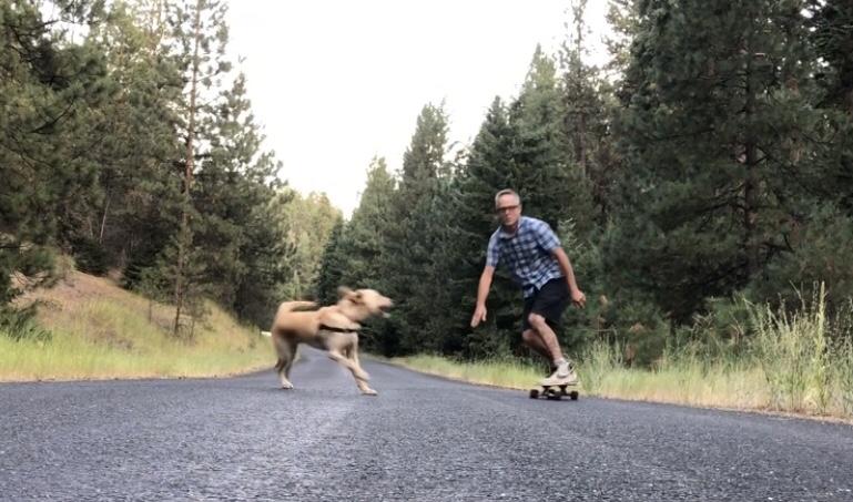 Perilous dog antics