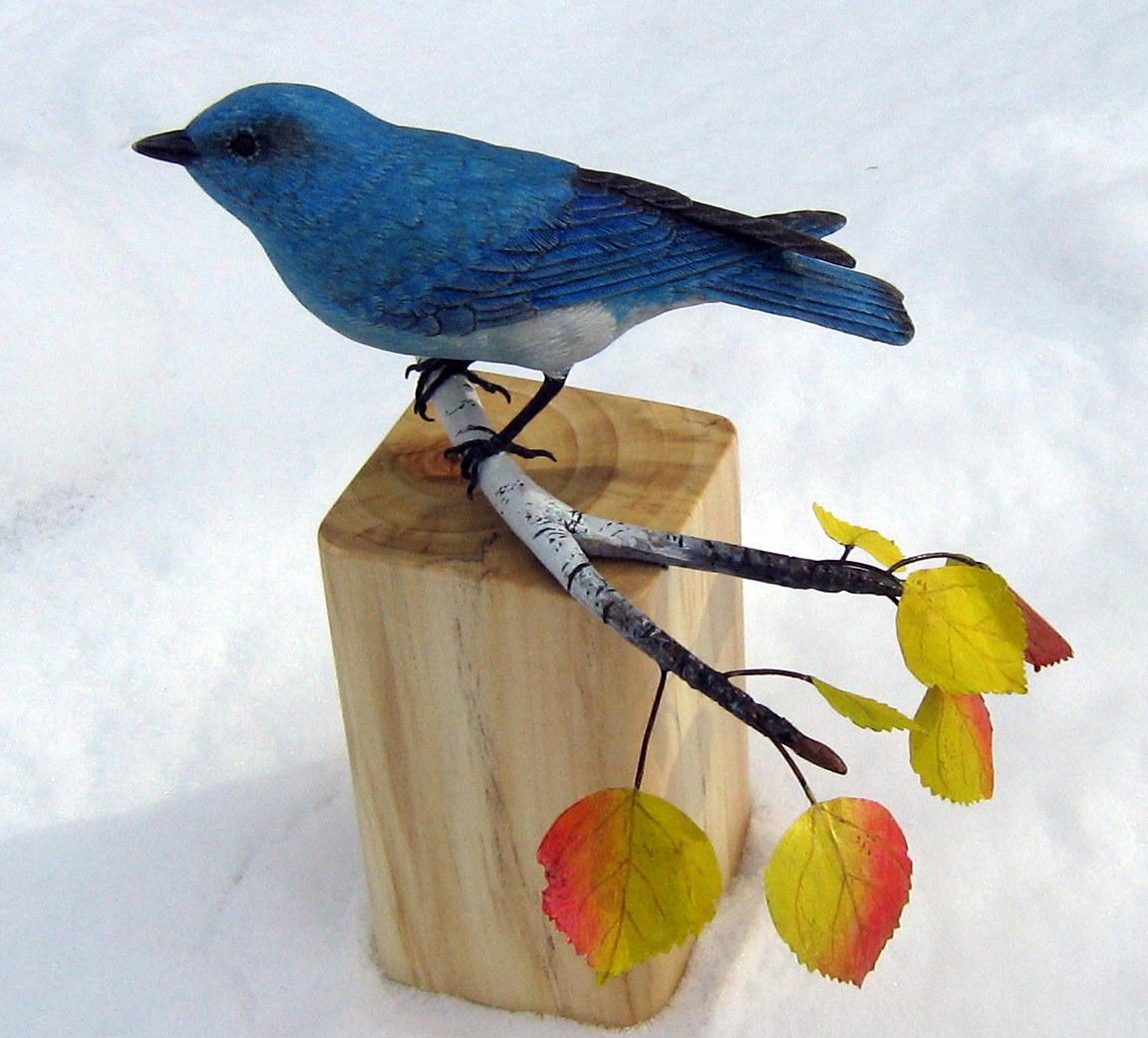 2018 Mountain Bluebird 1c.JPG