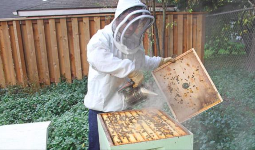 Bee Local - Spread the buzz about the role of bees
