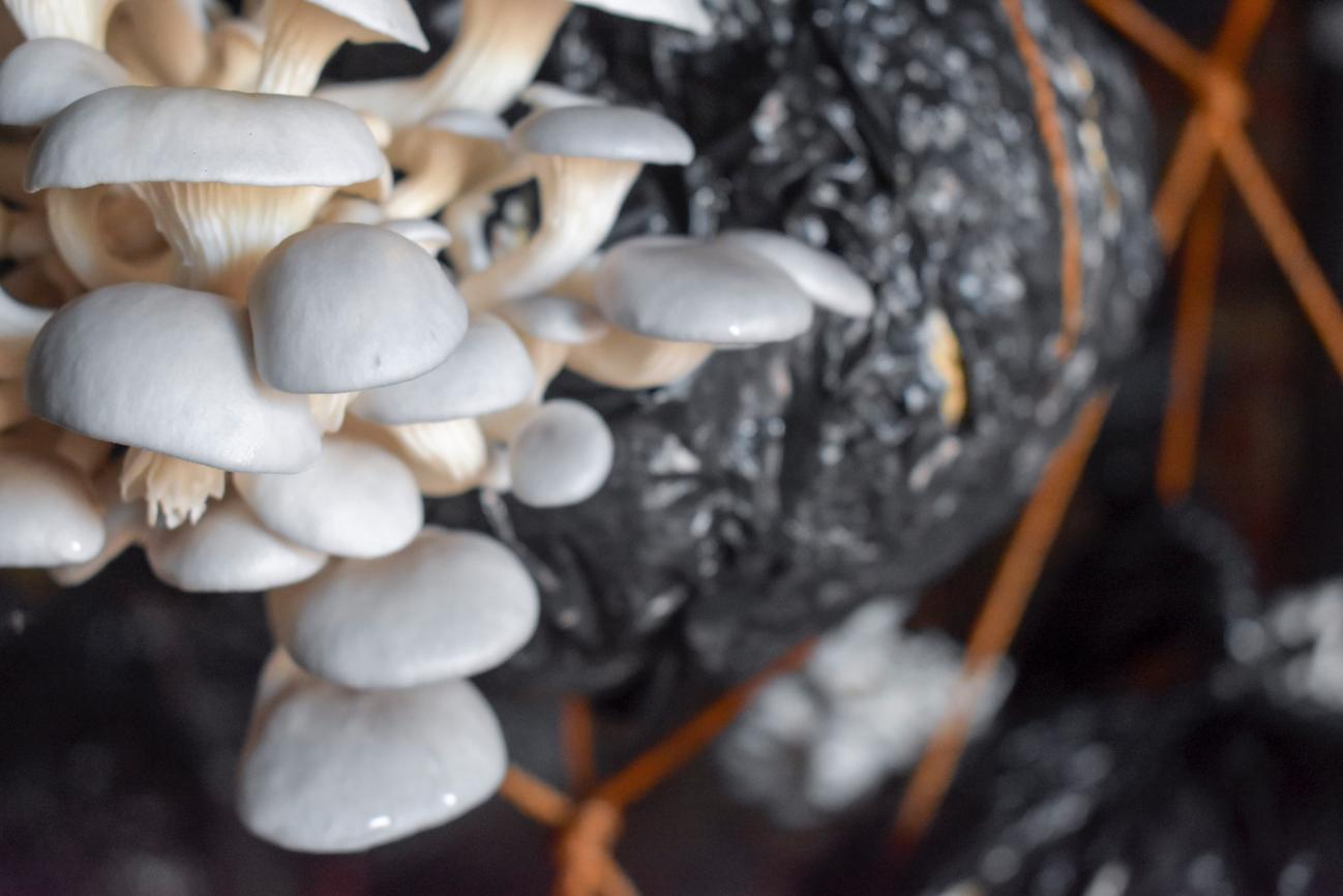 mushrooms edited.png