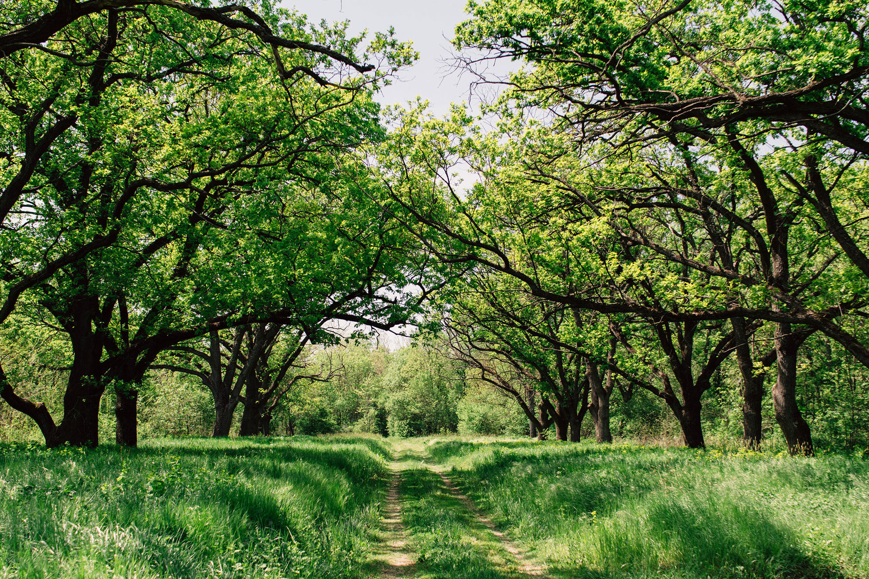 Hudson Tree Transplanting