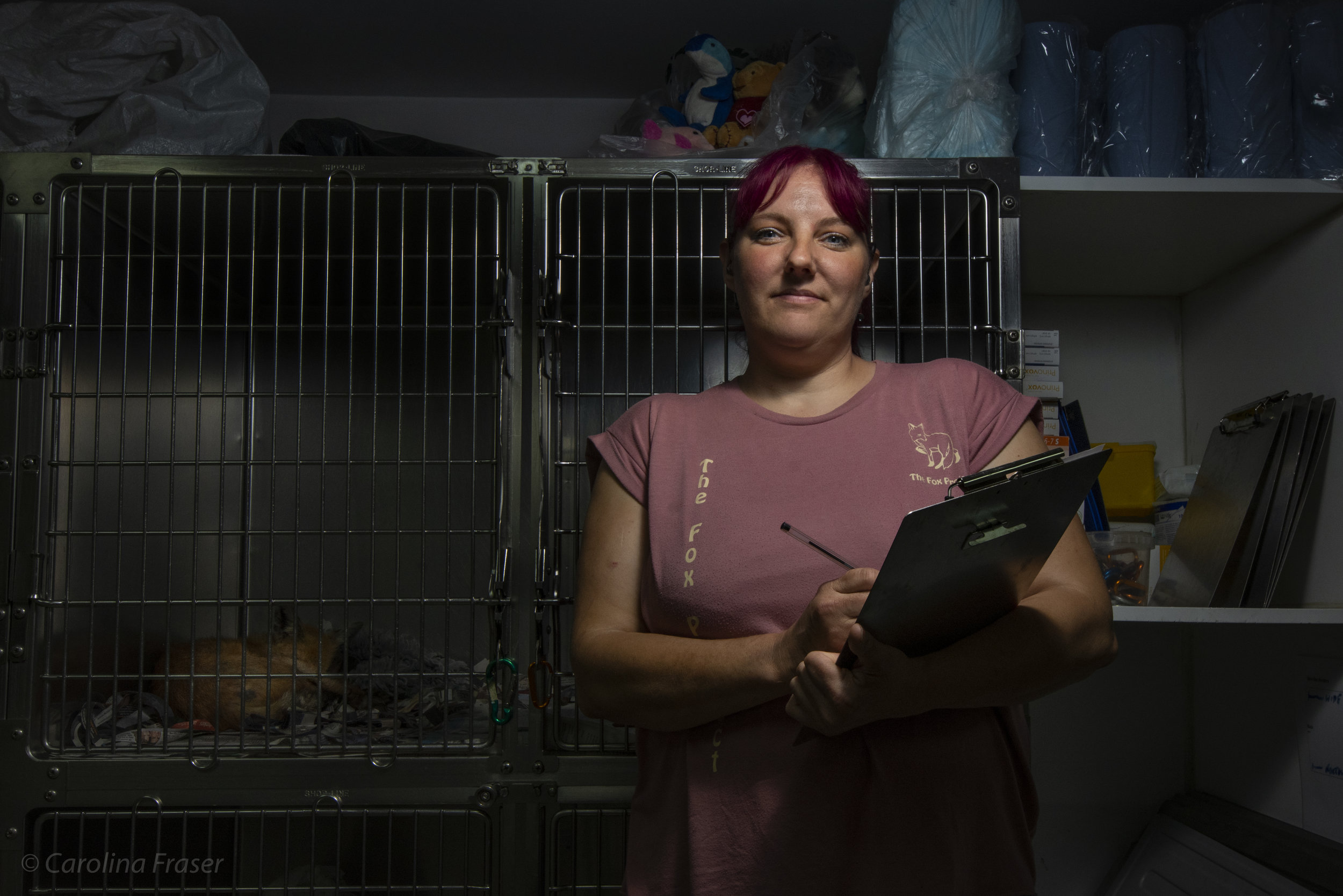 The Fox Project has two ambulances that are used to rescue and transport foxes. Taz Kenward is one of the ambulance drivers. She works with colleagues, volunteers and interns to treat around 800 foxes every year.
